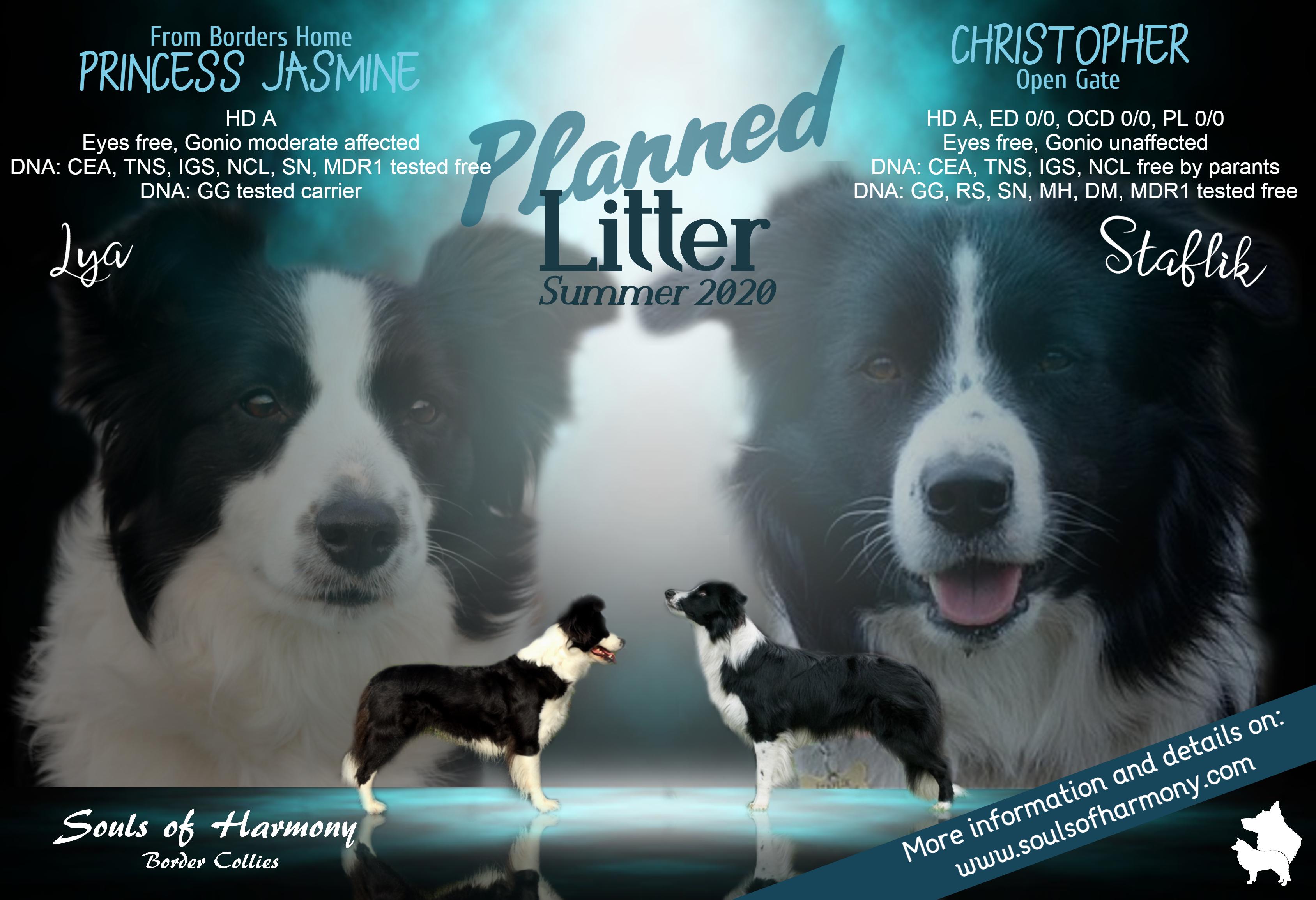 SOH_Planned litter_Summer 2020